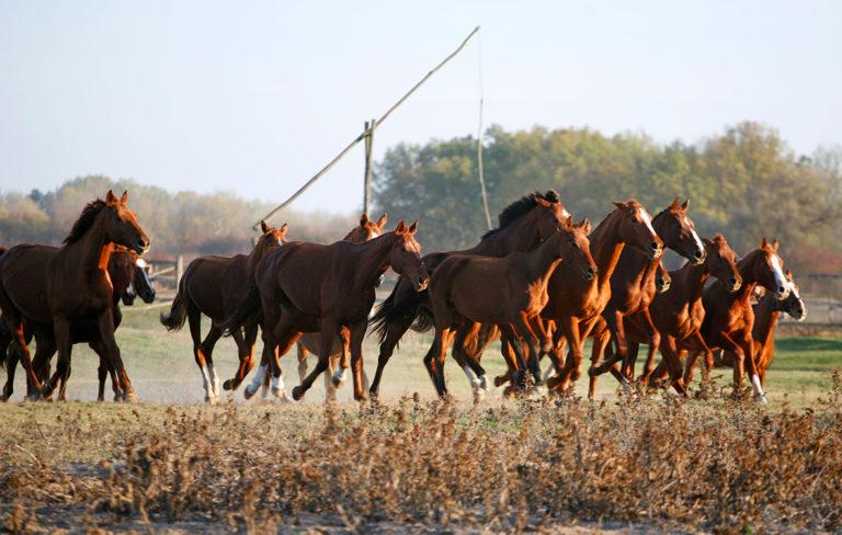 unkari ratsastus