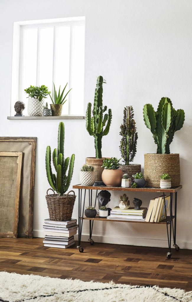 Kaktus sisustuksessa