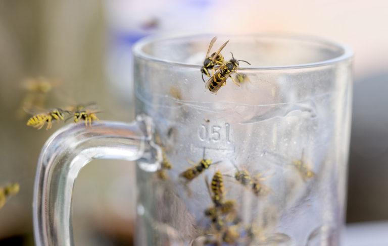 Miten ampiaisista pääsee eroon? 6 luonnollista kotikonstia, joilla karkotat ampiaiset