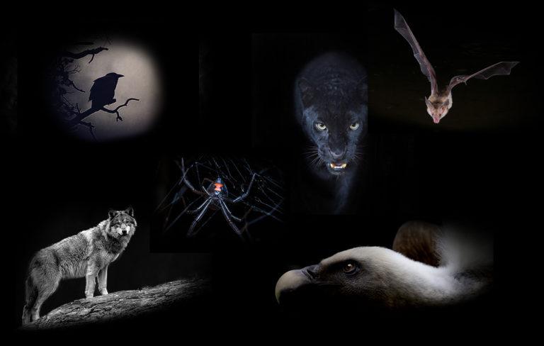 Mikä kuvan eläimistä kiinnittää huomiosi? Valinta paljastaa luonteesi pimeän puolen