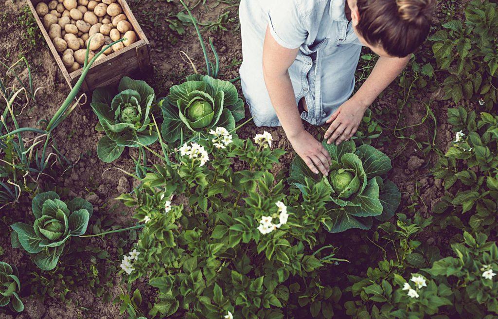 66 %:lla Annan lukijoista on oma puutarha.