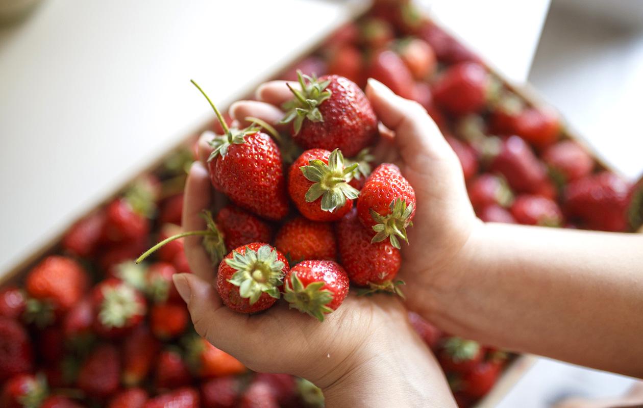 Kannattaako mansikat pakastaa rasiaan vai pussiin ja 4 muuta tärkeää vinkkiä mansikoiden pakastamiseen