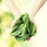 Pinaatissa on runsaasti lehtivihreää, vitamiineja ja kivennäisaineita.