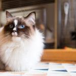Miau! Millainen kissa herättää sinun huomiosi?