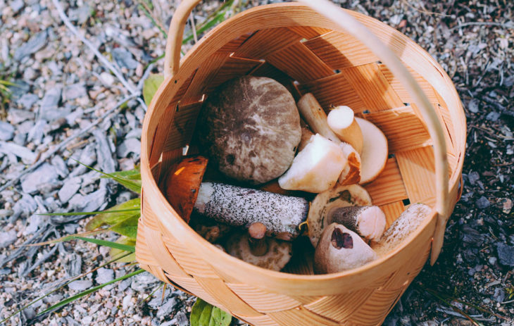 Älä sekoita näitä sieniä keskenään – pikaopas sienimetsään