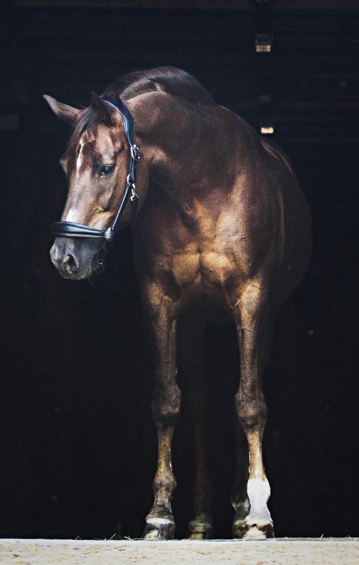Kalle-hevonen