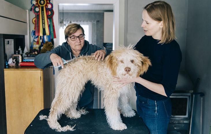 Koiran hankkiminen tarkoittaa myös käyntejä Riitta Häyrysen luona trimmattavana.