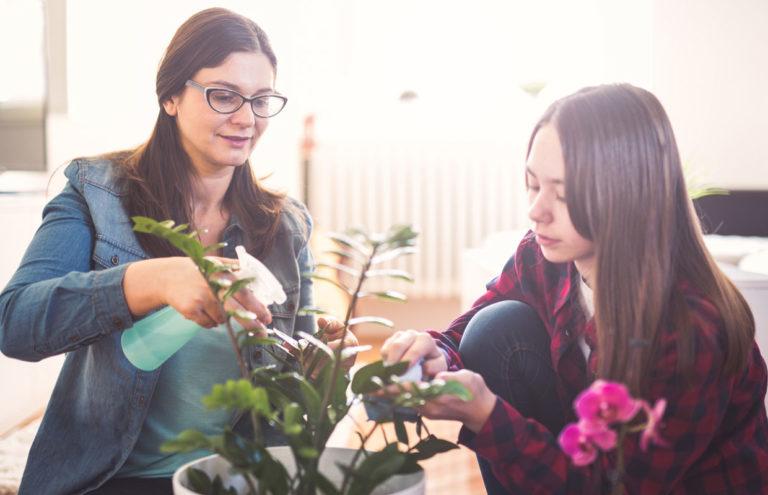 Huonekasvien huolto kannattaa aloittaa jo helmikuussa.
