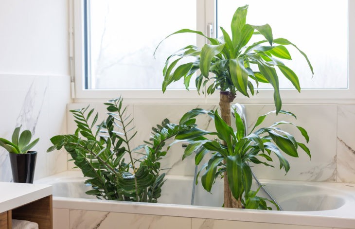 Huonekasvit voi pestä kylpyhuoneessa. Varo kuitenkin, ettei multa kastu litimäräksi!
