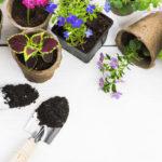 Mullanvaihdon aika! Sekä kukat että viherkasvit kaipaavat uutta multaa kevättalvisin.