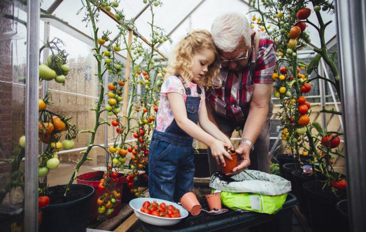 Tomaatin kasvatus kannattaa aloittaa maalis-huhtikuussa. Itse kasvatettu tomaatti maistuu niin perheen pienemmille kuin aikuisillekin.