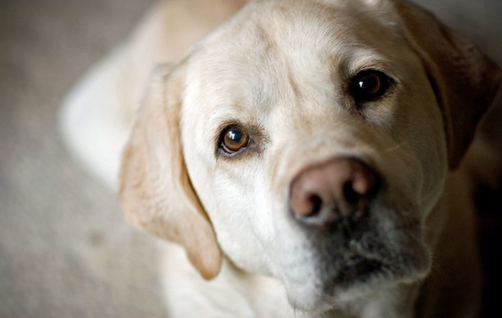 Koiran katse kertoo kaiken.