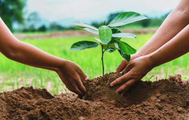 Mitä viedä mökille tuliaiseksi? Kiva mökkituliainen on esimerkiksi jokin maahan istutettava, kuten yrtti tai puun taimi.