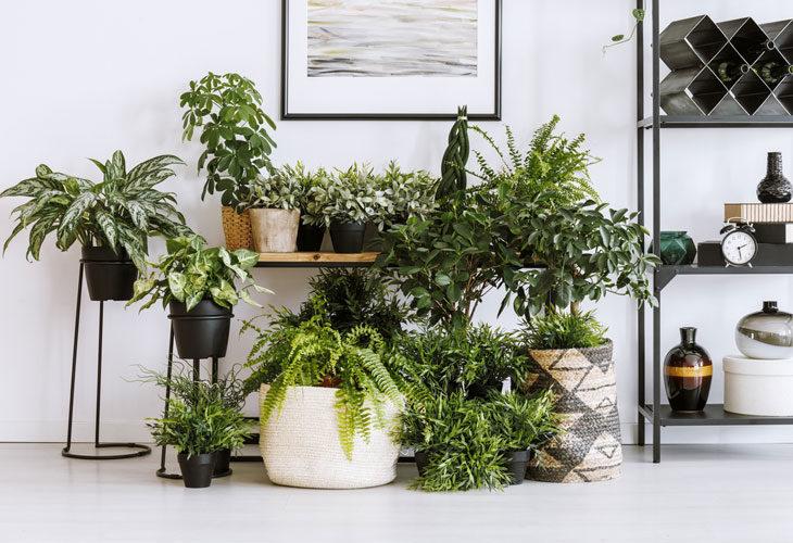 Mitä isommat ja ohuemmat lehdet, sitä enemmän kasvi tarvitsee myös vettä.