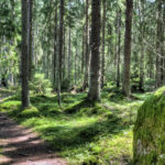Suomen maa-alasta noin 80 % on metsää.