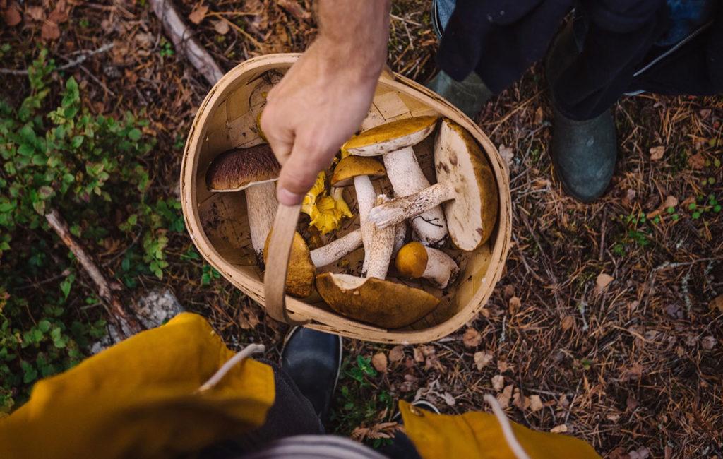 sienestäminen