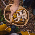 Metsän keskellä pääset nauttimaan luonnon rauhasta. Syksyllä mukaan kannattaa napata myös kori tai pussi sienilöytöjä varten!