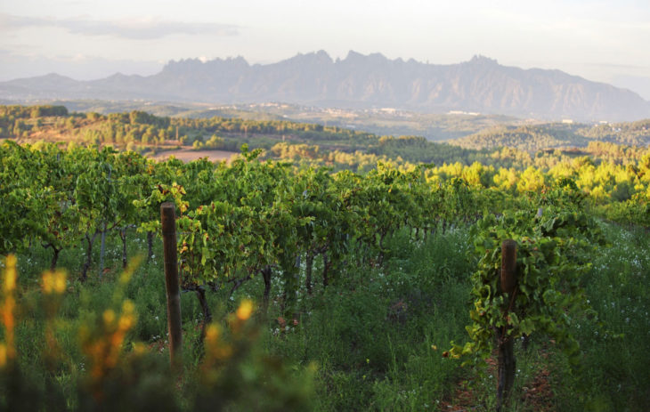 Penedesin viinialue Kataloniassa.
