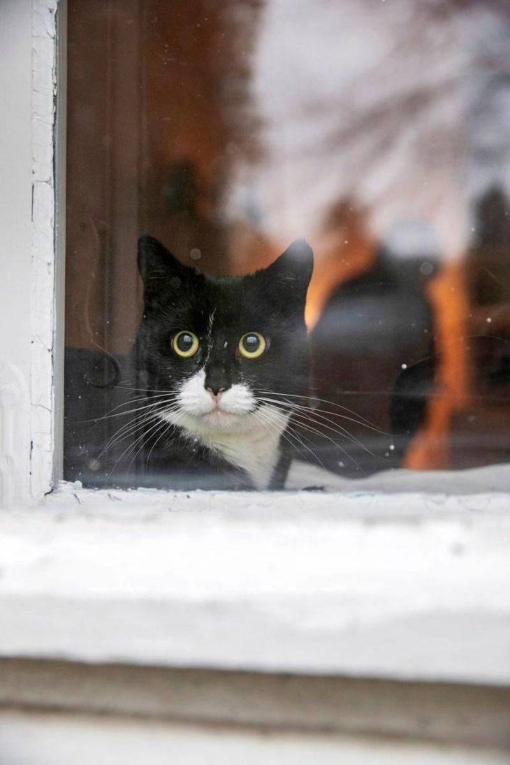 Siiri on sisäkissa. Lintuja voi tarkkailla olkkarin ikkunasta.