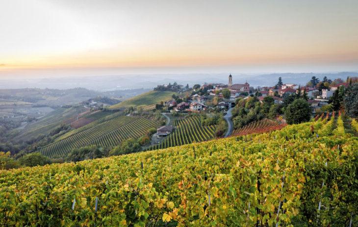 Piemonten viinipellot