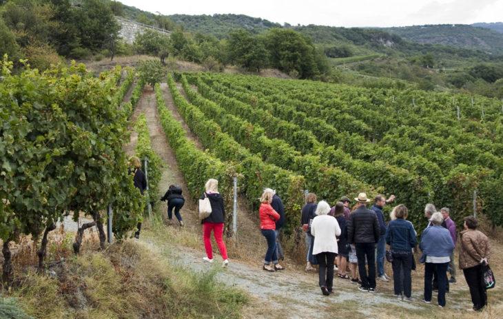 Viinimatkalla Italiassa ja Ranskassa