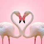 Eläimet sen osoittavat – rakkautta on monenlaista!