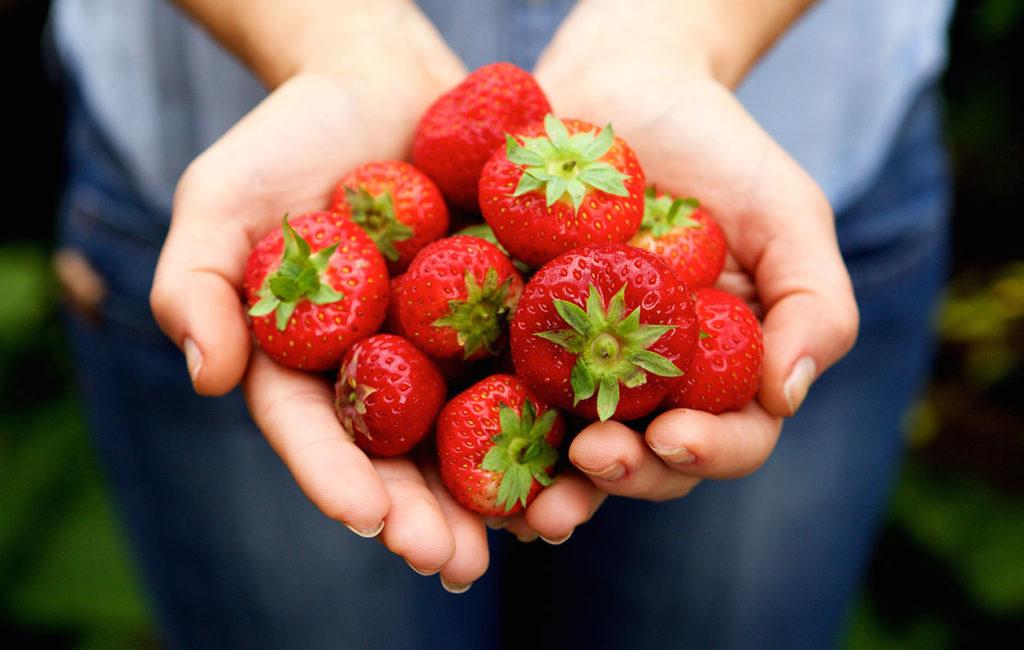 Mansikan c-vitamiini ja kuitupitoisuus tekevät siitä terveellisen lisän ruokavalioon.