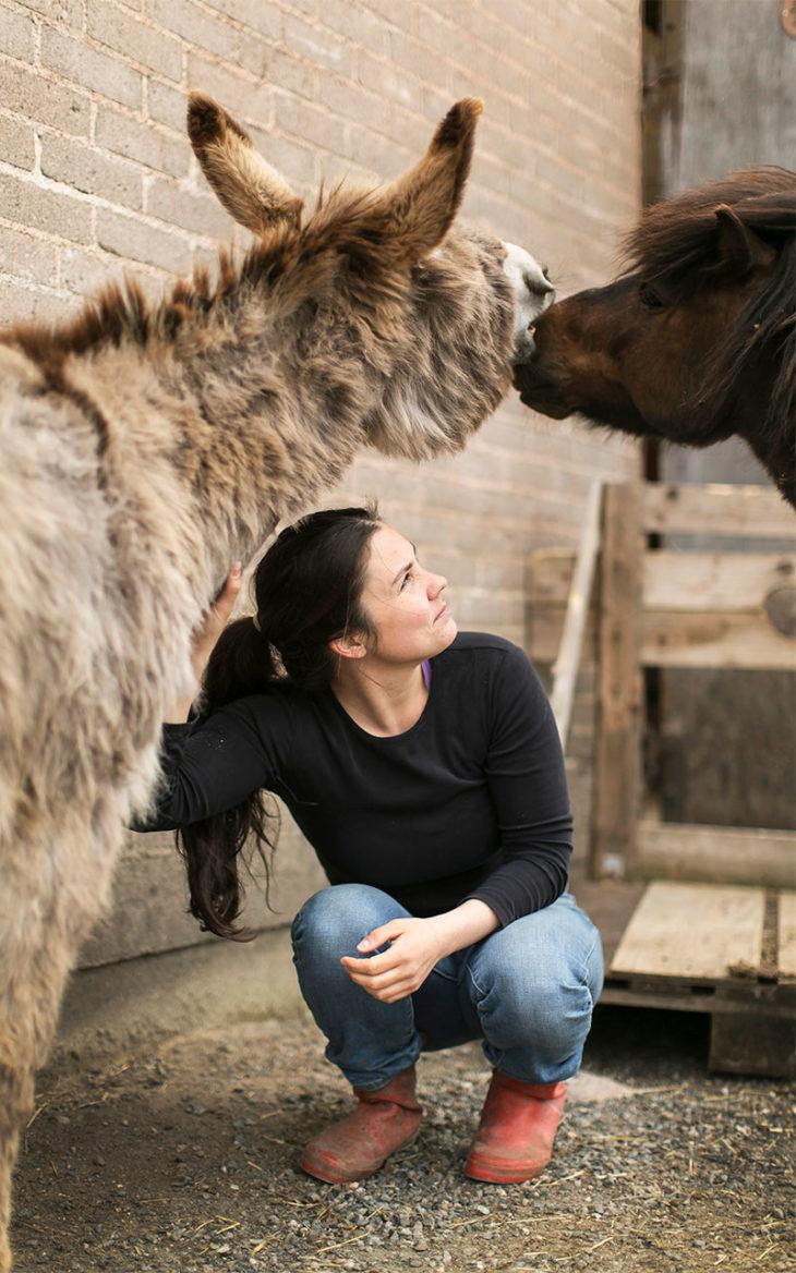 Annukka Cederlöf rapsuttaa aasia ja ponia. Annukalle tarjotaan paljon eläimiä. Hän haluaa kuitenkin laumansa olevan sen kokoinen, että hän pystyy huolehtimaan siitä itse. Kuvassa Napero-aasi ja Jerry-poni.