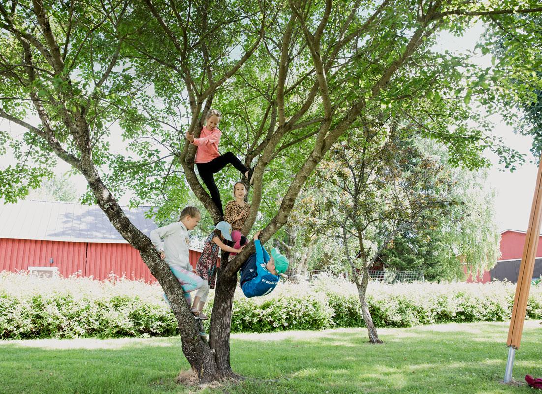Björnien lapset opettavat vieraille perinneleikkejä, pussihippaa ja puussa kiipeilyä.