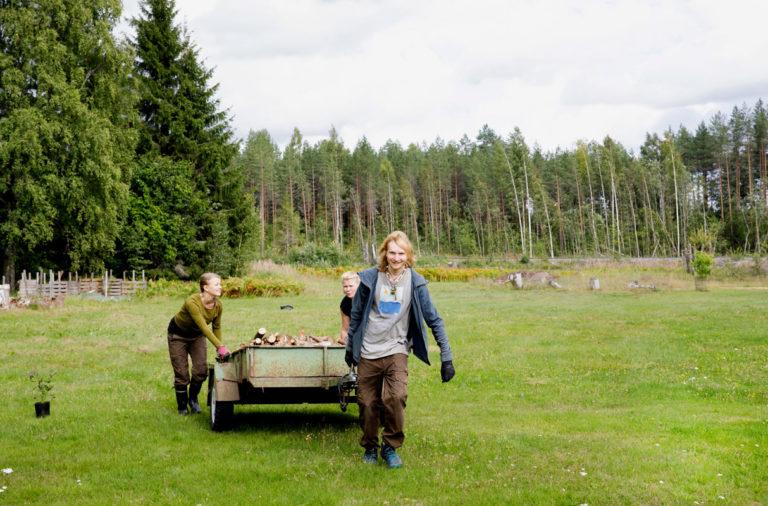 Anni Perälä (vas.), Sanna Tuunainen ja Jasper Keus asuvat liperiläisessä Sun Ahonlaita -yhteisössä. Polttopuut siirtyivät talkoilla kotaan.