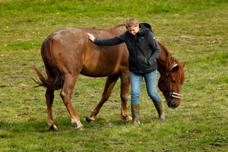 Aamuisin Riikka Peura vie kaksi hevostaan kotipihan vieressä sijaitsevaan hakaan laiduntamaan. Hevosten kanssa touhuaminen auttaa tyhjentämään pään huolista.