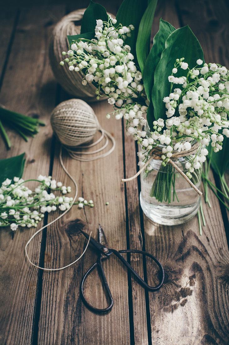 Kielo on suosittu kukka myös jouluisin. Kuvassa kieloja lasipurkissa.