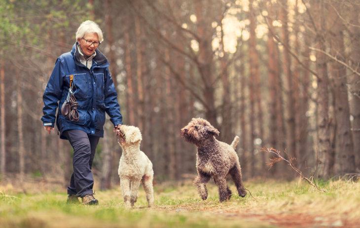 Baby boomer ulkoiluttaa koiriaan.
