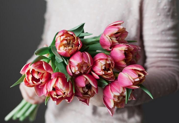 Tulppaanien hoito onnistuu, kun muistaa, että kukat tykkäävät viileästä. Kuvassa henkilö pitelee tulppaanikimppua.
