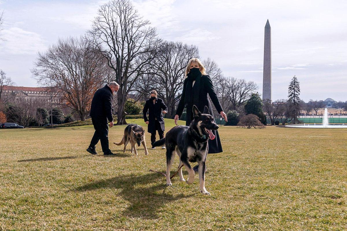 Joe ja Jill Bidenin koirat Champ ja Major muuttivat Valkoiseen taloon tammikuussa. Donald Trump oli ensimmäinen presidentti sataan vuoteen, jolla ei ollut koiraa Valkoisessa talossa.