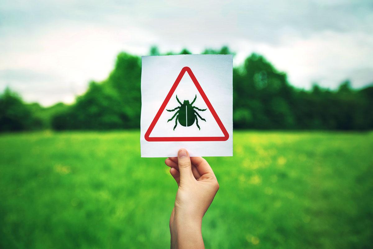Puutiaisaivokuume ja borrelioosi ovat punkkien levittämiä tauteja.