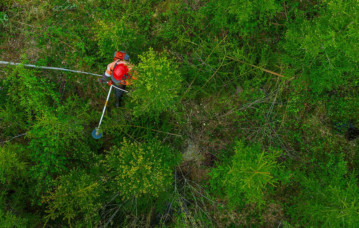 Ylhäältä päin otettu kuva, jossa näkyy metsää ja siellä kävelevä metsuri.
