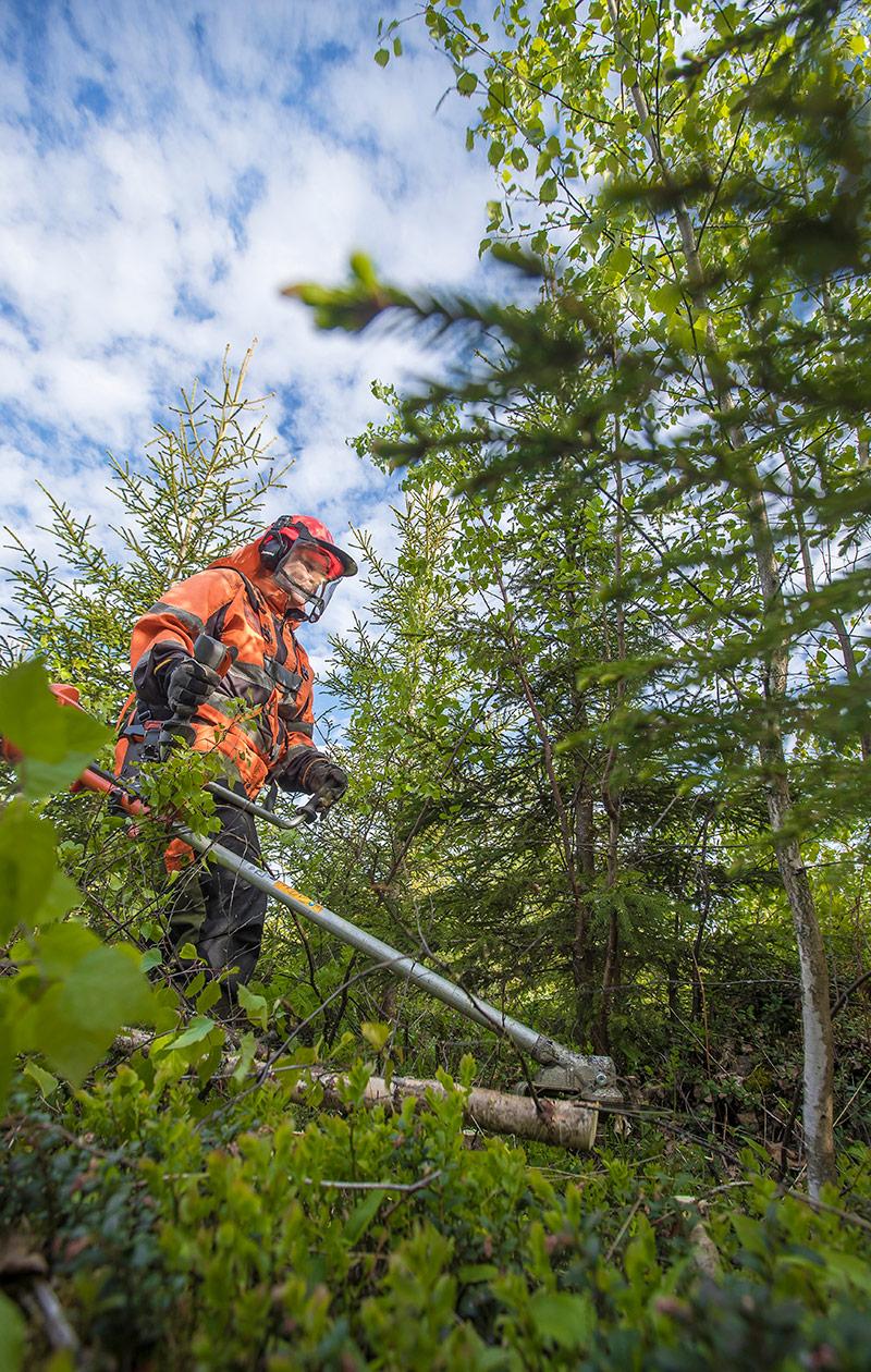 Metsuri Aura Kinnari raivaa metsää.