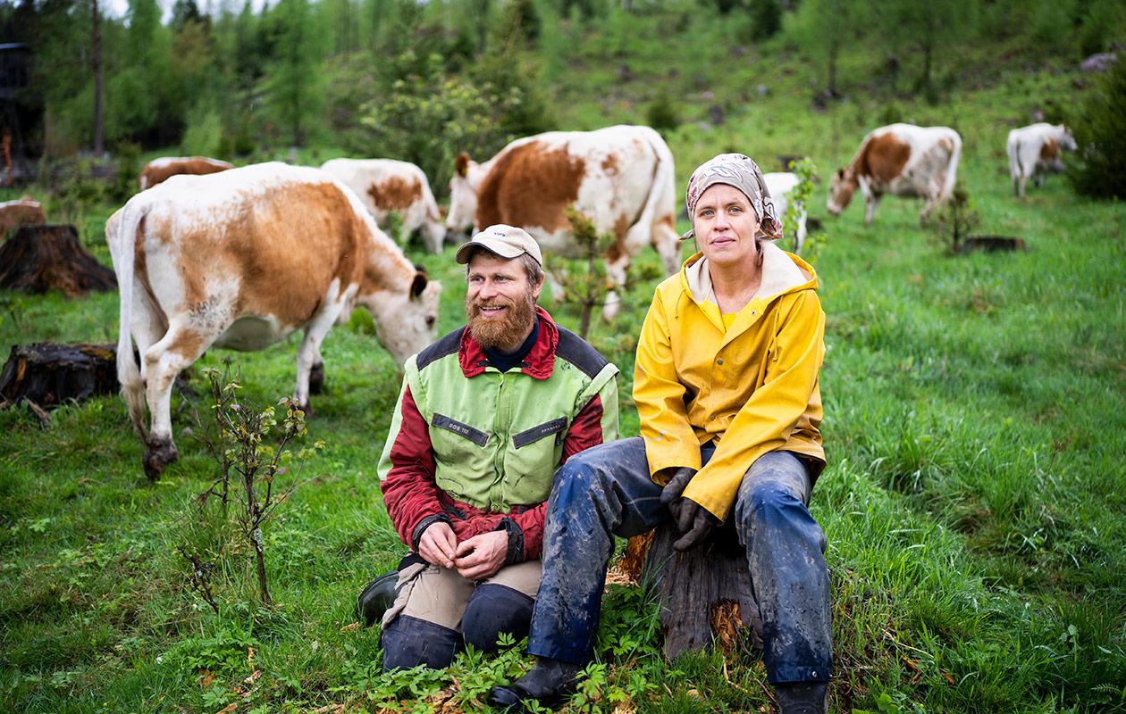 Mika ja Laura Hämäläinen. Heidän takanaan näkyy lehmiä.