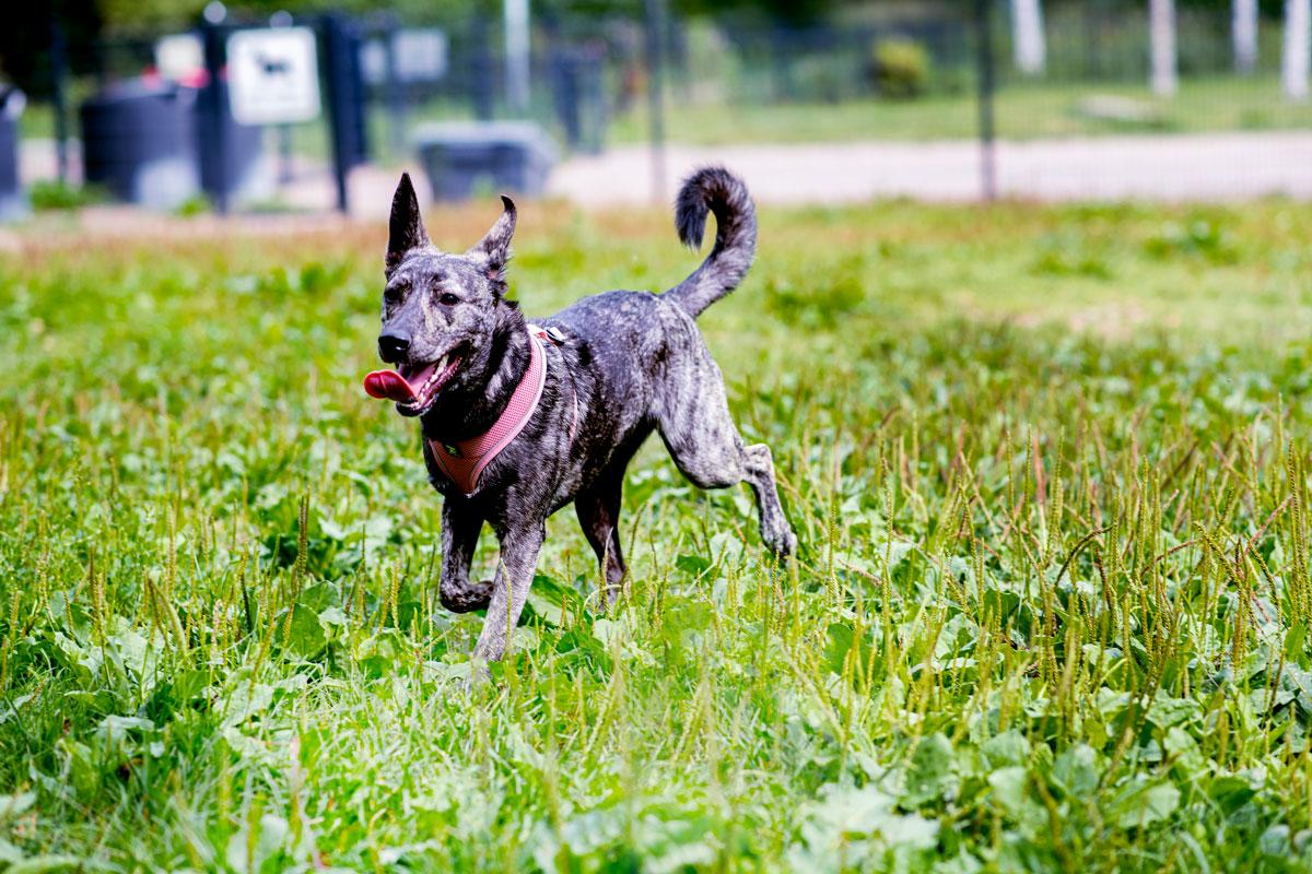 Rescue-koira Vieno