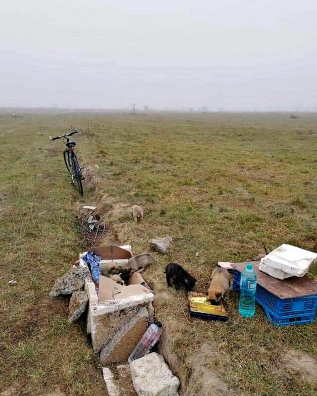 Romanialainen pelto, jolta rescue-koira Vieno sisaruksineen löytyi.