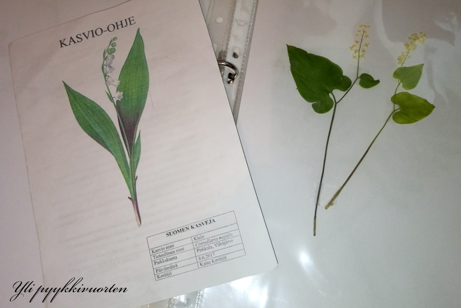 kasvien kerääminen
