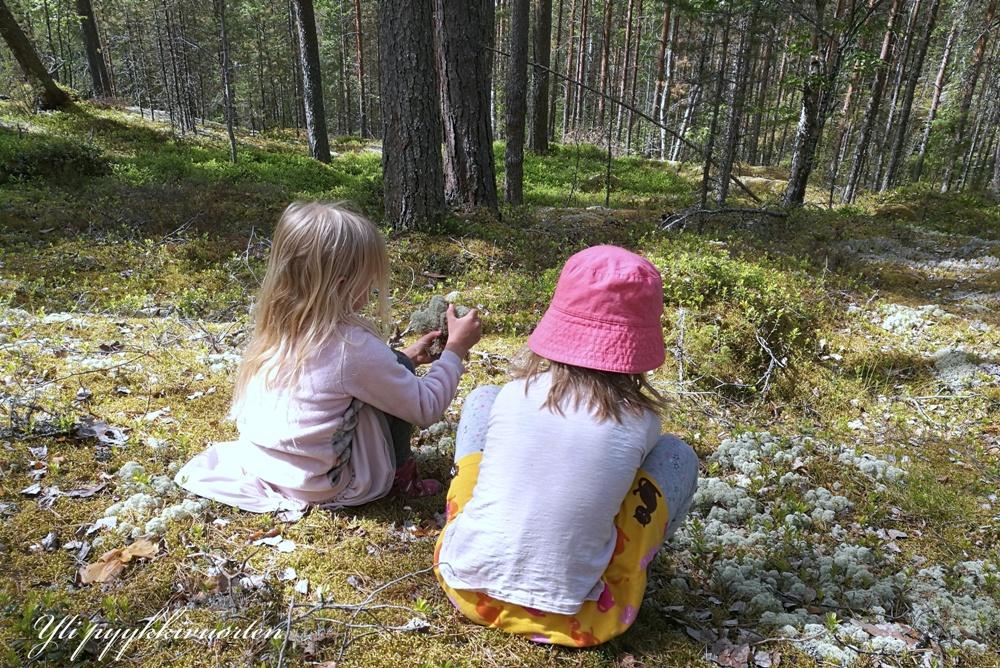 metsä, Yli pyykkivuorten