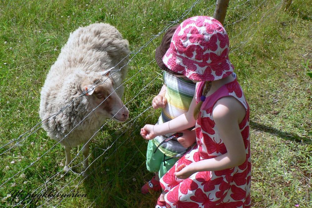 lammas, lapset